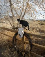 Cat In The Cottonwoods