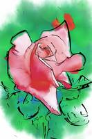 Pink Rose Bloom by Kirt Tisdale