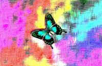 Aqua Black Butterfly On Colorful Abstract