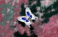 Glowing Blue White Butterfly On Magenta, Red, Blue