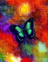 Blue Black Green Butterfly On Red Orange Abstract