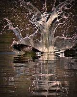 Osprey Crashing Water