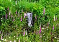 Mountain Wildflowers by Carol Groenen