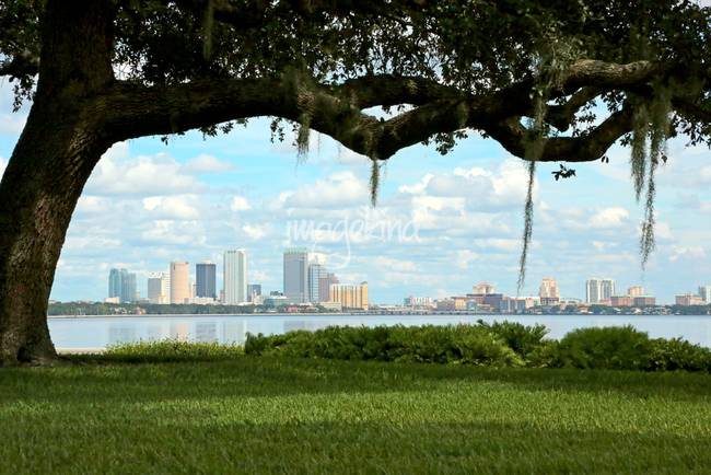 Tampa Skyline through Old Oak