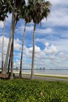 Palms on Bayshore by Carol Groenen
