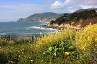 California Wildflowers and Coastline by Carol Groenen
