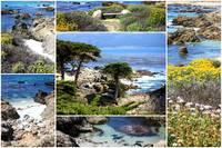 California Coast Collage by Carol Groenen