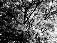 012 - ABSTRACT TREES, #12, EDIT C