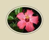Beautiful Hibiscus Card