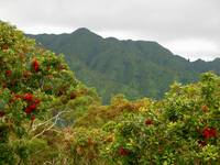 Hawaiian Koolau Mountains