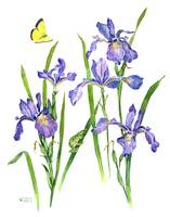 Wild Iris Neighbors by Sharon Himes