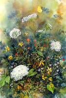 Queen Ann's Lace Tangle by Sharon Himes