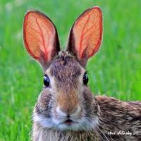 """""""All Ears"""" by shelshots"""