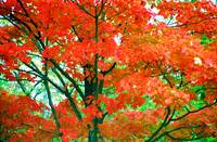 Trees Explode In Colors Of Red, Orange, And Green