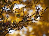 Macro Tree Branch, Orange Leaves, Autumn Beauty