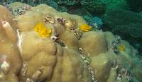 A colony of Christmas Tree Worms