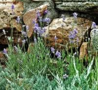 purple flowers and rocks