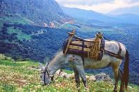 In Clover on Mt. Parnassus, Delphi, Greece by Priscilla Turner