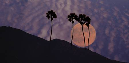 full-moon-palms