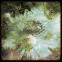 Fern Abstraction by Giorgetta Bell McRee