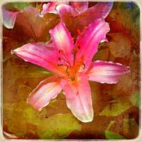 Lily! by Giorgetta Bell McRee