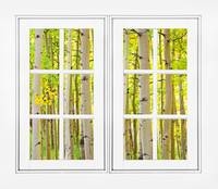 Aspen Forest White Picture Window Frame View