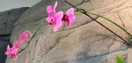 pink orchid landscape brushstrokes