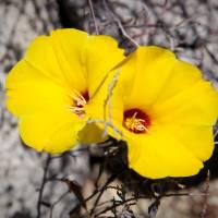 Desert Blossoms by Jen Wheeler