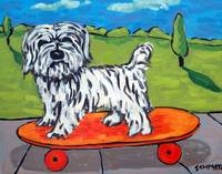 Havanese Dog Skateboarding