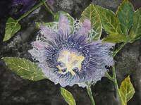 passion flowers purple art print