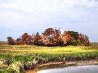 Island of small trees surrounded by marsh hdr ima