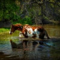 waterhorse_001 by Jim Westin