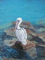 Pelican on the Rocks