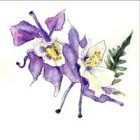 Columbine Flower Art