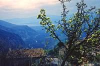 Spring Blossoms, Delphi, Greece 1960 by Priscilla Turner