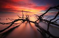Dead Trees on Fiery Sunset