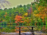 The Autumn Picnic Table