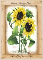 Vintage Rustic Sunflowers, Precious Heirloom Seeds