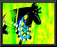 Bright Color Contrast Butterfly