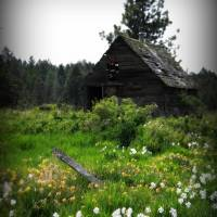 Old Shack in a Meadow of Flowers Art Prints & Posters by Britney Spoonemore