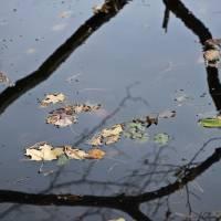 Autumn Floats by julie scholz