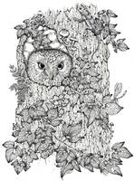 touch up owl white background no date little darke