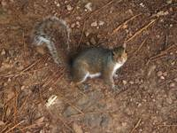 Grounded Squirrel 5