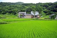 Sado's Rice Farm