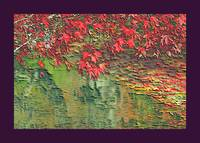Leaves On the Creek 3 large border