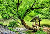 the Magical Tree and the Gazeebo by the Lake
