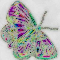 butterfly color pencil