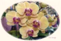 YELLOW ORCHIDS CLUSTER