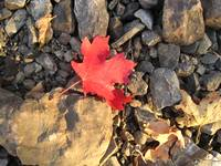 Red leaf on grey rocks
