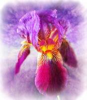 Iris-painting-soft-watercolor